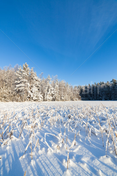 Bevroren meer sneeuw gedekt zonnige winter Stockfoto © Juhku