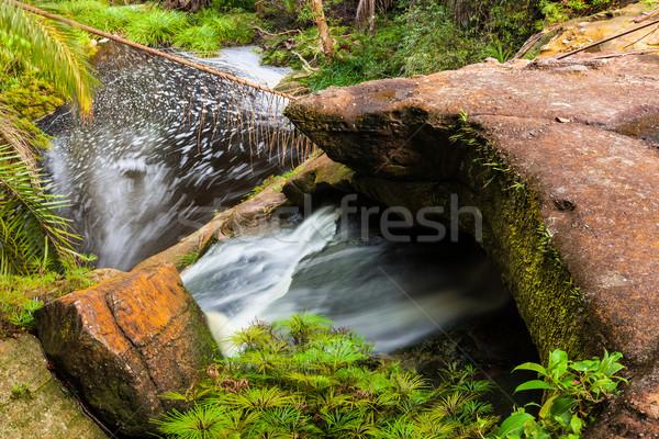 Kicsi folyam dzsungel park Malajzia Borneo Stock fotó © Juhku