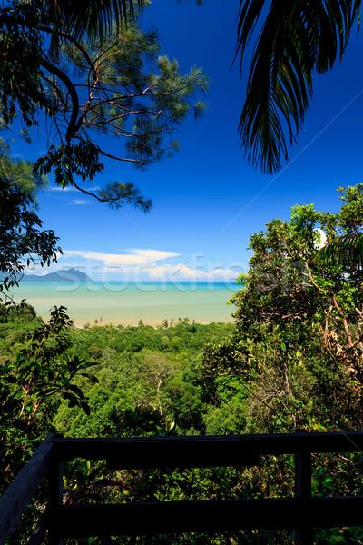 Tropische landschap jungle heuvels Maleisië borneo Stockfoto © Juhku