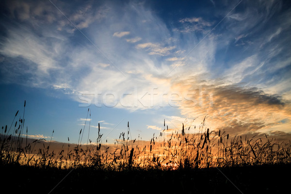 Feno grama silhuetas dramático pôr do sol céu Foto stock © Juhku