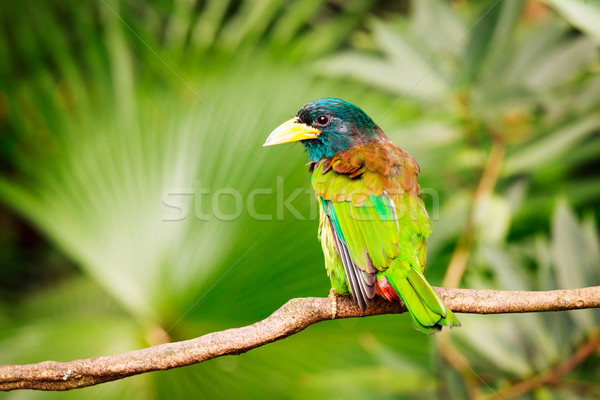 Exotic colorful bird sitting on a branch Stock photo © Juhku