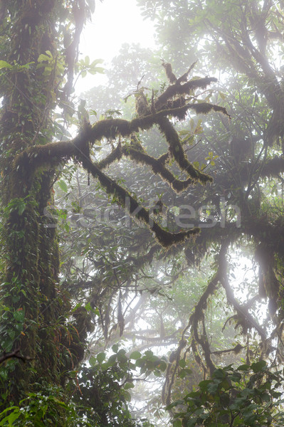 Diep weelderig mistig regenwoud la Costa Rica Stockfoto © Juhku