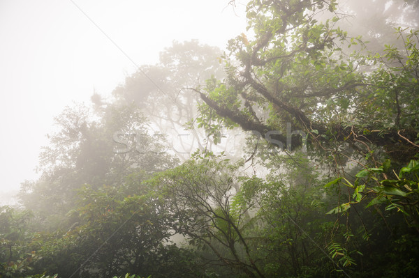 Deep in lush foggy rainforest Stock photo © Juhku