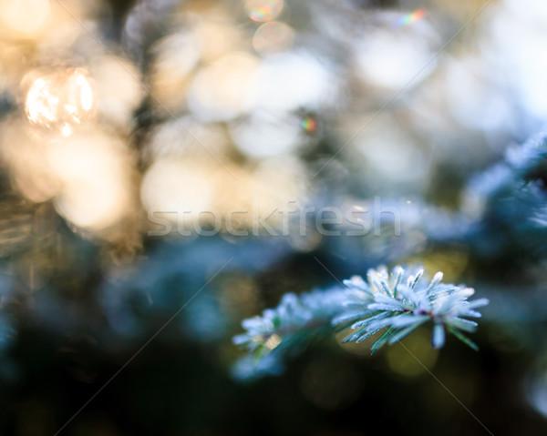 Congelada enfeitar ramo ensolarado inverno dia Foto stock © Juhku