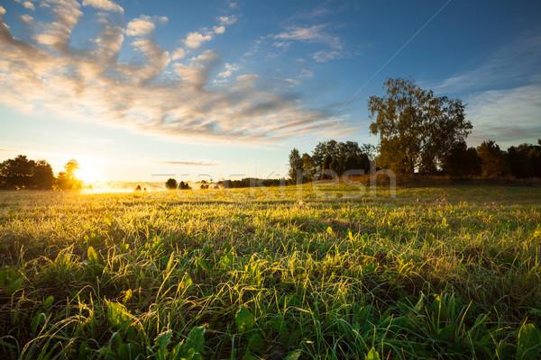 Tranquil grassland and trees at sunrise Stock photo © Juhku