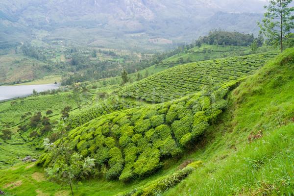 Foto stock: Chá · Índia · nublado · dia · folha · árvores