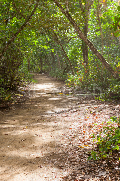 Dirt road in tropical forest Stock photo © Juhku