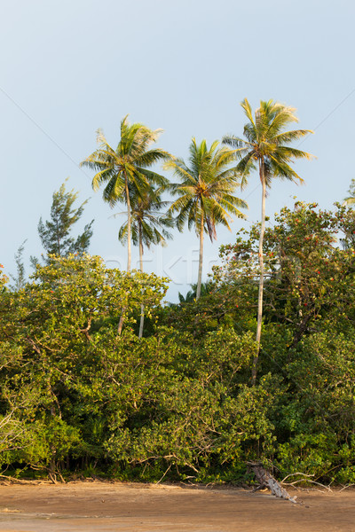 Trees in exotic beach Stock photo © Juhku