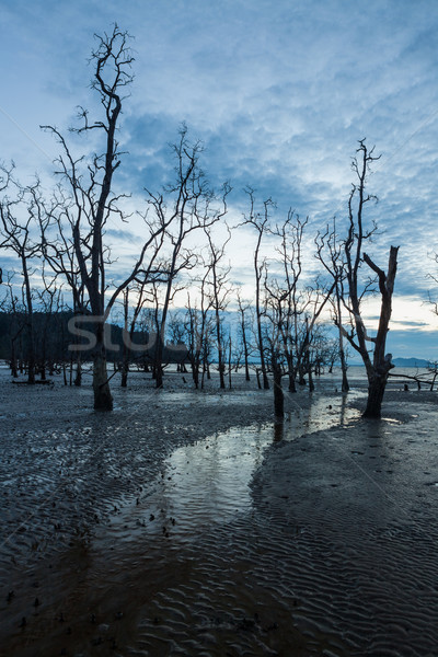 Dead forest and muddy beach at twilight Stock photo © Juhku
