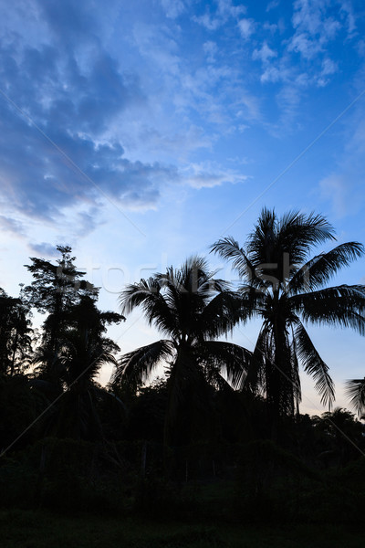 Stock photo: Clouds and tree silhouettes after sunset