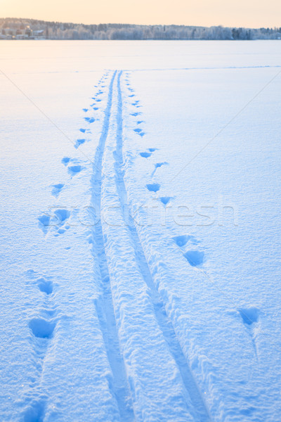 スキー 雪 湖 冬 フィンランド 日没 ストックフォト © Juhku