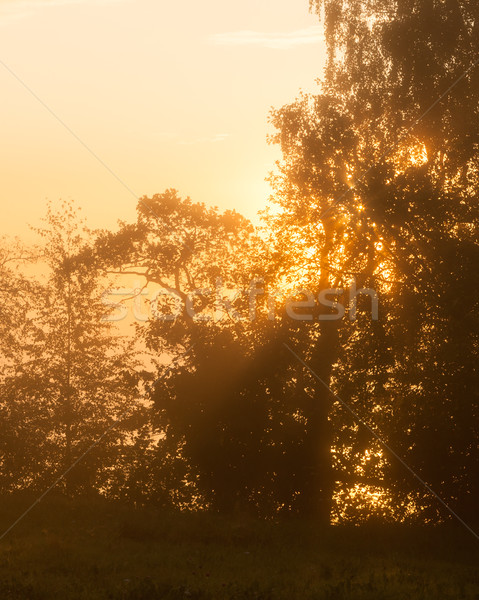 Foggy sunrise at behind trees filter edit Stock photo © Juhku