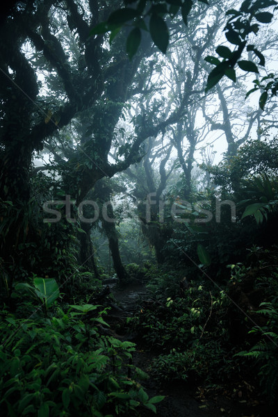 Deep in lush rainforest Stock photo © Juhku