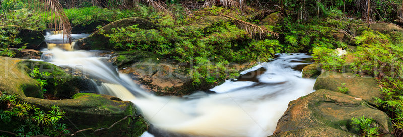 Small stream in rainforest panorama Stock photo © Juhku