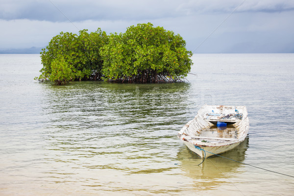 Mangrove tree and boat in water Stock photo © Juhku