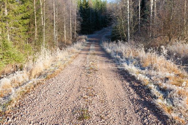 Landelijk onverharde weg rijm landschap weg bos Stockfoto © Juhku