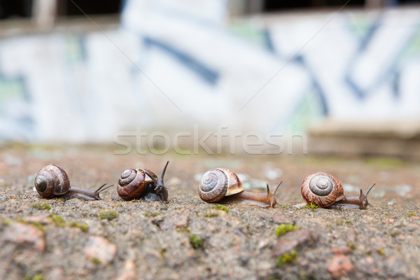 Group of small snails going forward Stock photo © Juhku