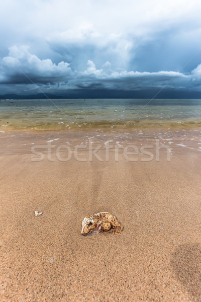 Sand beach and stormy clouds Stock photo © Juhku