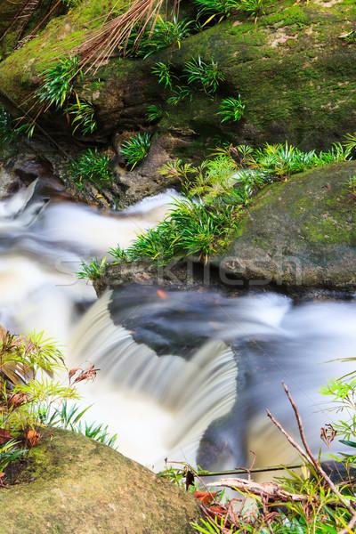 Kicsi vízesés dzsungel park Malajzia Borneo Stock fotó © Juhku