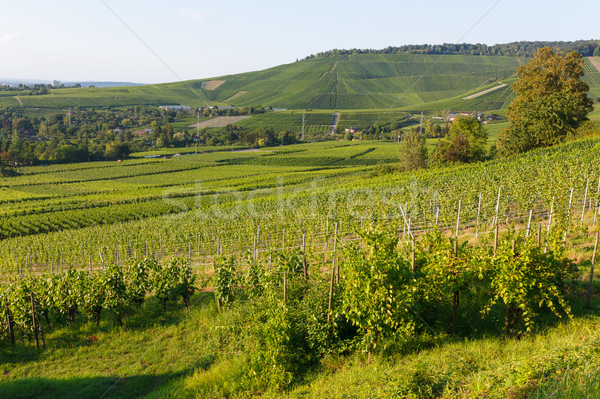 şarap alanları manzara yaz gün gökyüzü Stok fotoğraf © Juhku