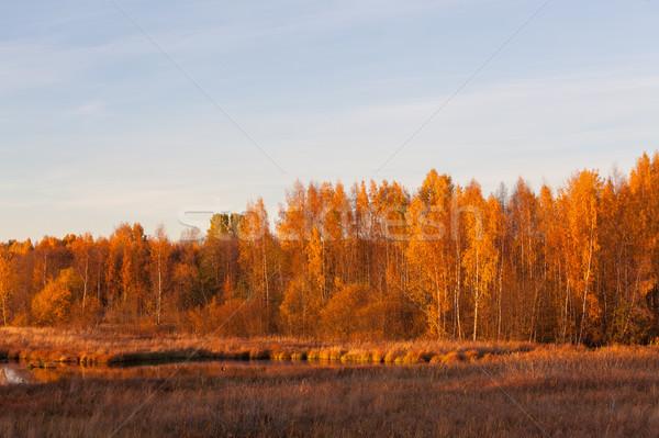 природы пейзаж осень цветами трава Сток-фото © Juhku