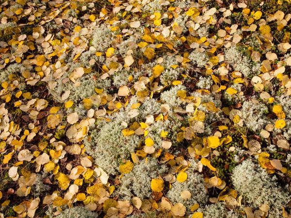 Fallen autumn leaves on ground Stock photo © Juhku