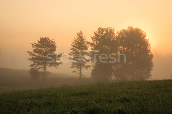 Сток-фото: Восход · туманный · луговой · Финляндия · трава · лес