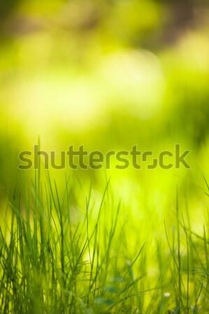 緑の草 成長 草 自然 抽象的な ストックフォト © Juhku