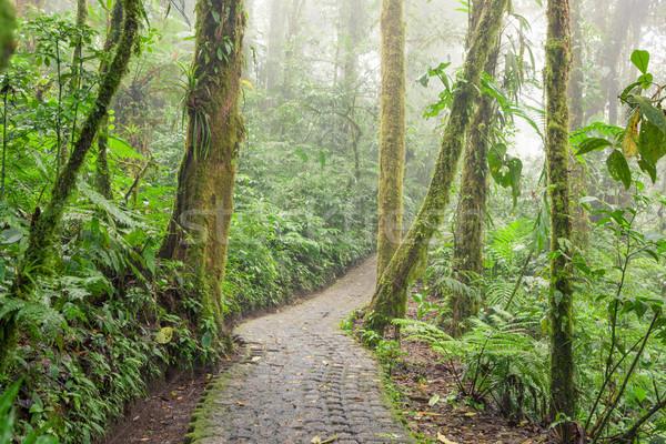 Kő út esőerdő felhő erdő fa Stock fotó © Juhku