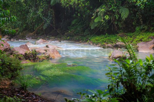 Рио пышный леса парка Коста-Рика деревья Сток-фото © Juhku