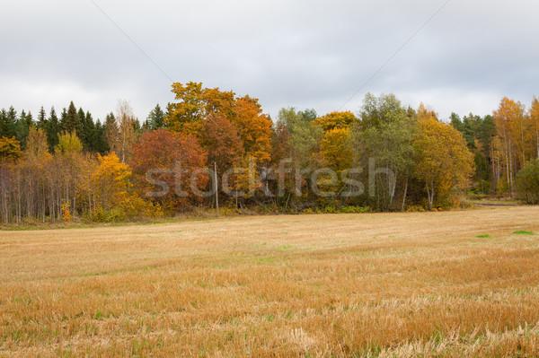 Outono paisagem árvores céu nuvens Foto stock © Juhku