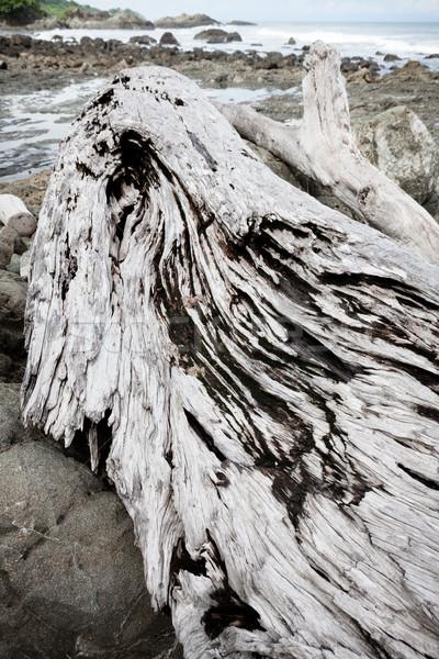 Szary driftwood plaży dzień ocean fali Zdjęcia stock © Juhku