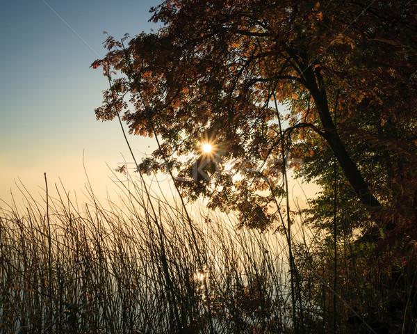 Szeszélyes reggel égbolt nap tájkép háttér Stock fotó © Juhku
