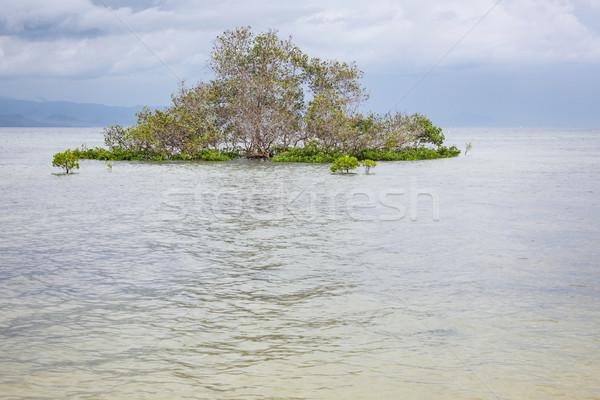 Mangrove tree in water Stock photo © Juhku