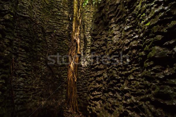 árbol raíces naturales muro de piedra forestales naturaleza Foto stock © Juhku