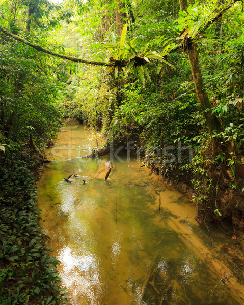 Klein rivier jungle borneo Maleisië water Stockfoto © Juhku