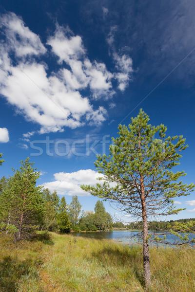 небольшой сосна озеро Финляндия лет небе Сток-фото © Juhku