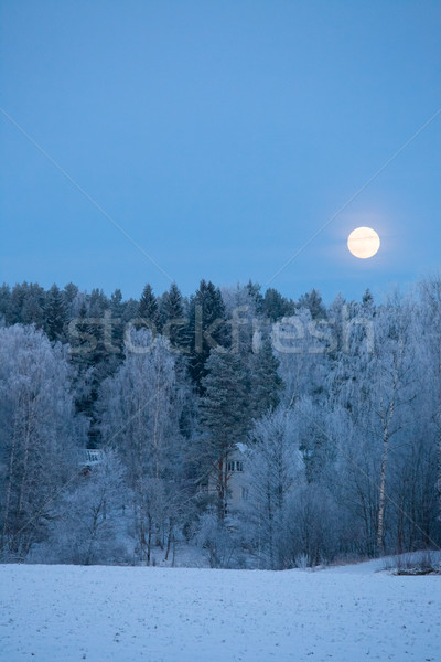 Full moon over frost covered forest Stock photo © Juhku