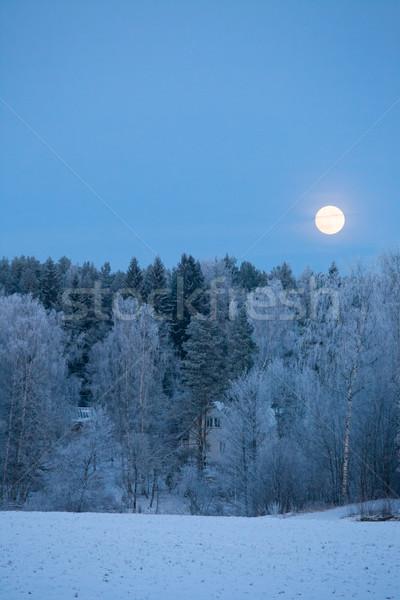 Telihold fagy fedett erdő tájkép hold Stock fotó © Juhku