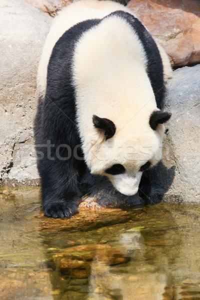 Panda su dev kaya park tropikal Stok fotoğraf © Juhku