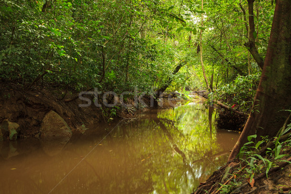 Small jungle river in borneo Stock photo © Juhku
