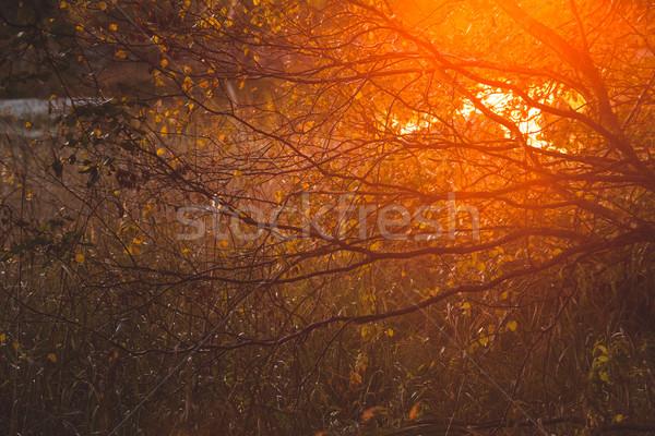 日光 茂み 自然 森林 ストックフォト © Juhku