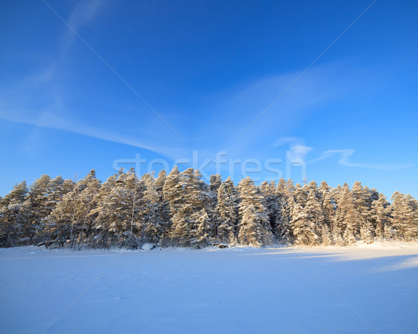 凍結 湖 雪 カバー 森林 冷たい ストックフォト © Juhku