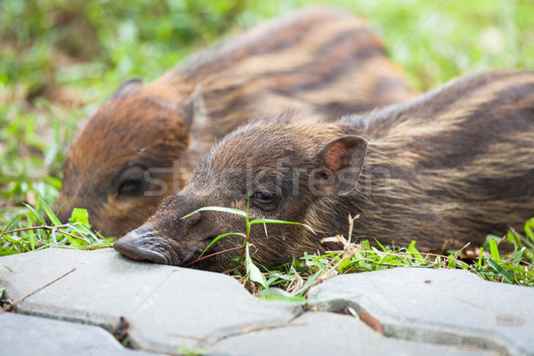 ребенка спальный трава спать грязи Сток-фото © Juhku