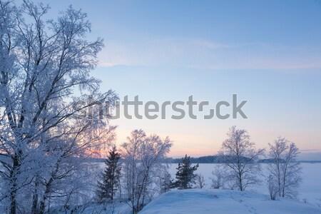 Bevroren boom berk zonsondergang hemel Stockfoto © Juhku