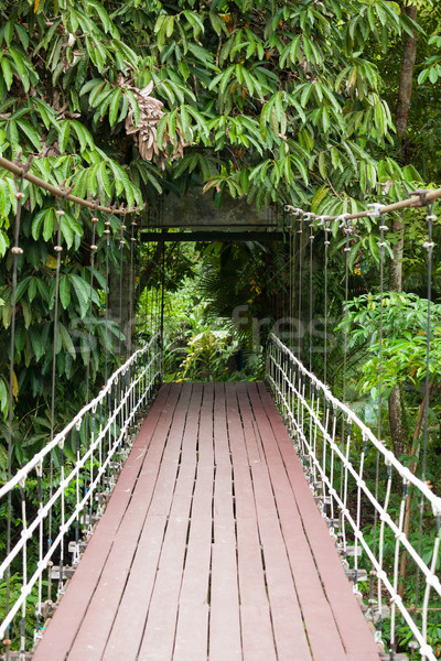 Entrance bridge in Gunung mulu national park Stock photo © Juhku