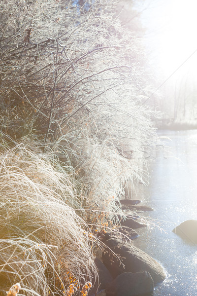 мороз сено утра Sunshine покрытый пейзаж Сток-фото © Juhku
