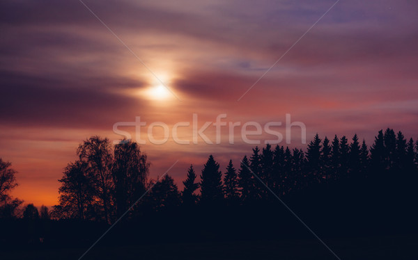 Night landscape and cloudy starry sky Stock photo © Juhku
