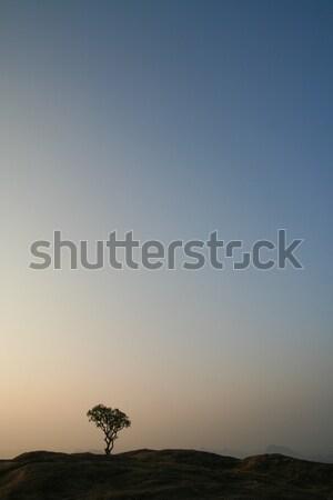 孤独 ツリー 先頭 丘 日の出 小 ストックフォト © Juhku