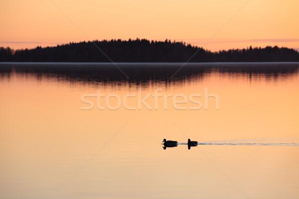Zwemmen meer zonsondergang tijd twee natuur Stockfoto © Juhku